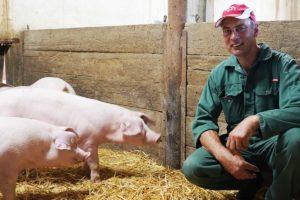 Schweine-Auslaufhaltung